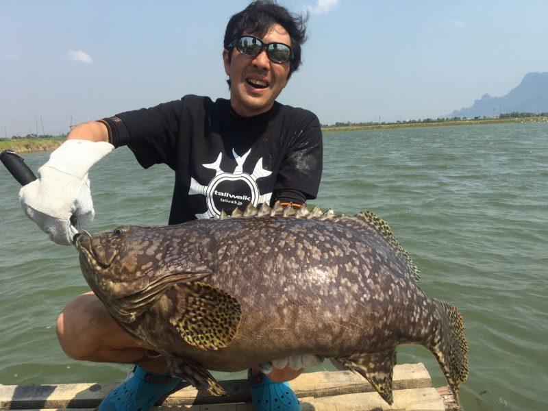 須江が釣ったグルーパー