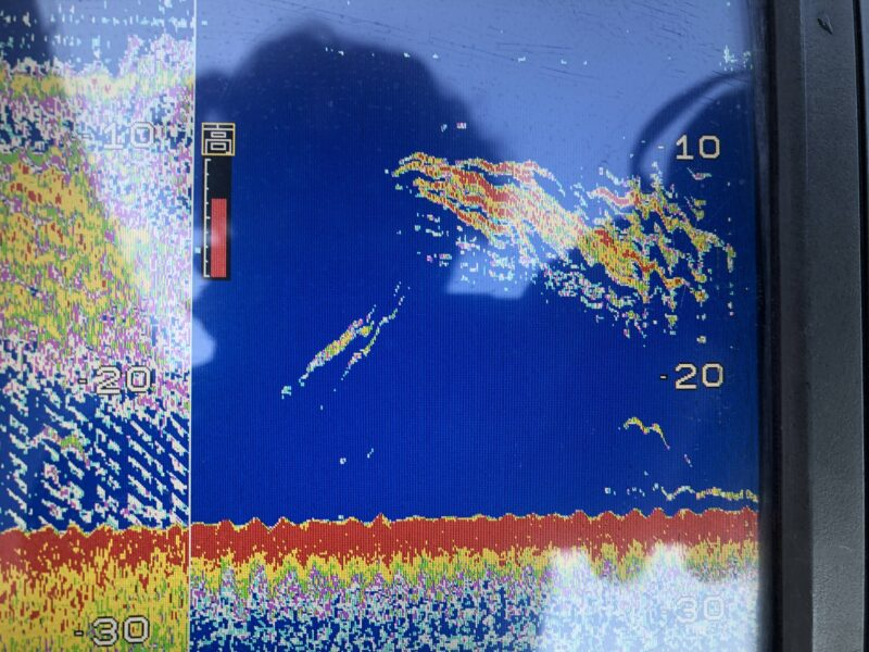 ホンデックス 魚探画像 シーバス中層とボトム